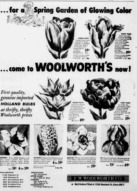 Woolworth's Tulip Ad